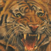 tattoo galleries/ - Nate Beavers Color Tiger Portrait Tattoo